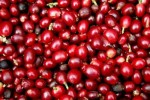 Giá nông sản hôm nay 25/5: Giá cà phê ngừng giảm, tăng nhẹ, giá tiêu tăng 2.000 đồng/kg