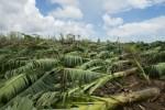 Ouragan Maria: l'état de catastrophe naturelle publié au Journal officiel