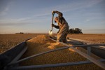 Trump Pledged to Help Small Farms. Aid Is Going to Big Ones
