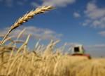 Consultoria reduz previsão de safra de trigo na UE por problemas em França e Alemanha