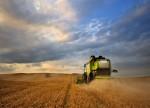 KWS erwartet trotz sinkender Getreidepreise Wachstum