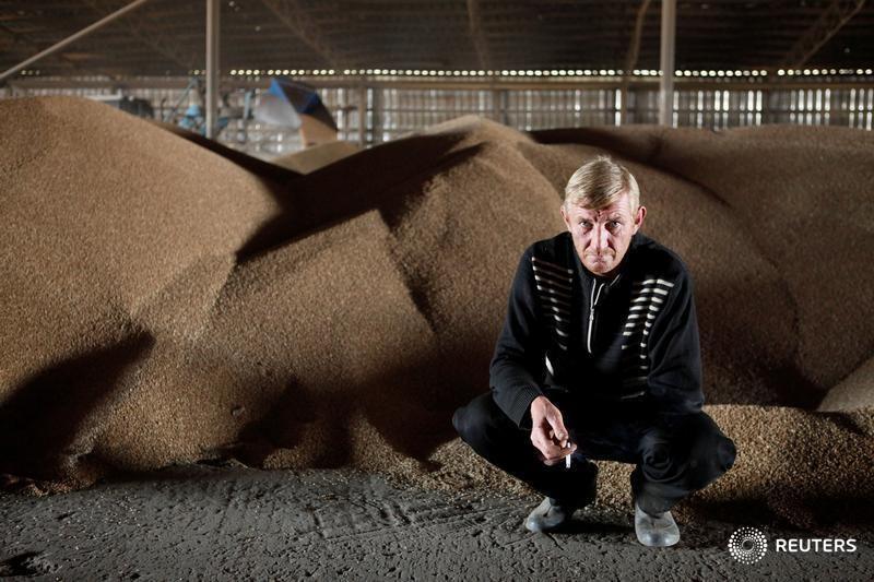 © Reuters. Зерно на складе в селе Грушевское Ставропольского края