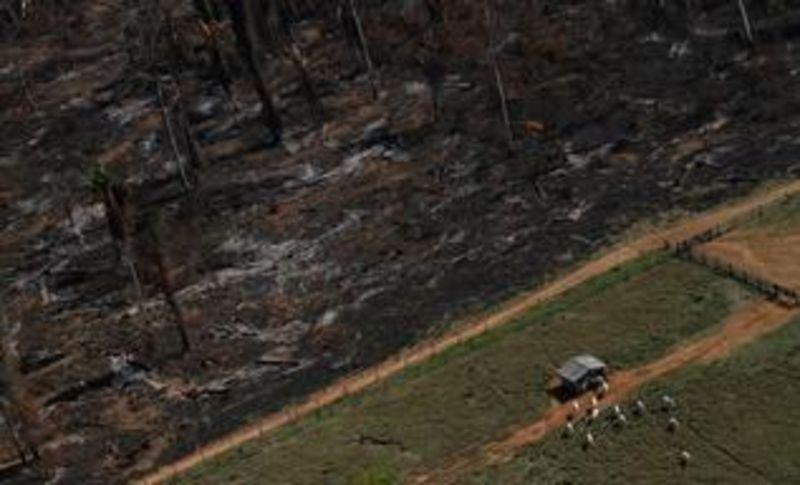 © Reuters. Burger King promete terminar con la deforestación en 2030