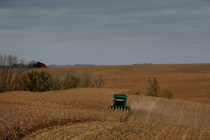 © Reuters. Farmer Blake Erwin drives a combine as he harvests corn on his farm near Dixon, Nebraska
