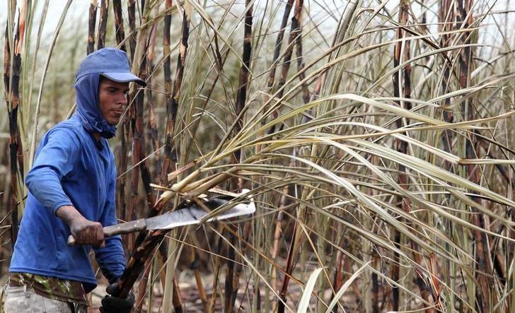 © Reuters. Trabalhador corta cana de açúcar em plantação em Campos dos Goytacazes, no estado do Rio de Janeiro, Brasil