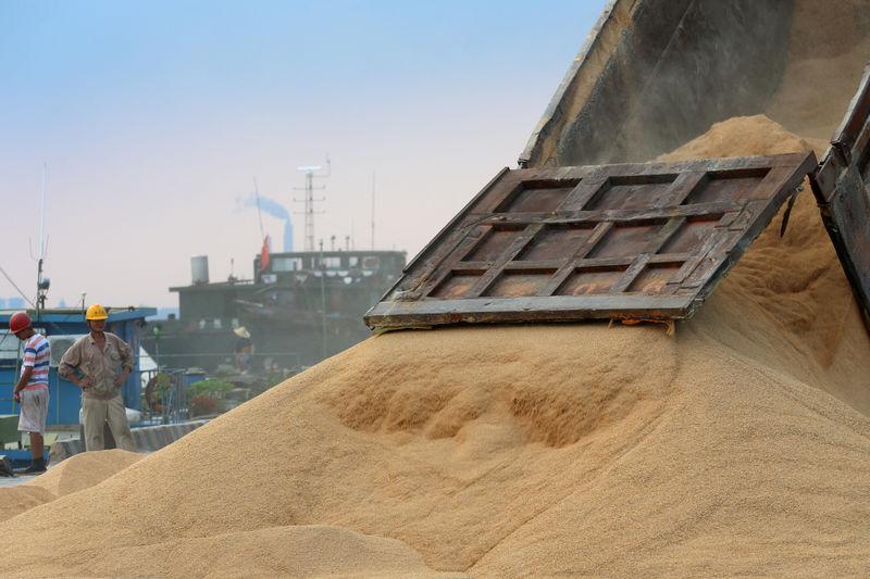 © Reuters. China dice que sus importaciones agrícolas desde EEUU caerán bruscamente