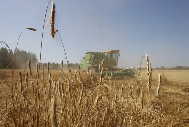 © Reuters. سوف كون الروسية تخفض توقعها لمحصول الحبوب في 2018