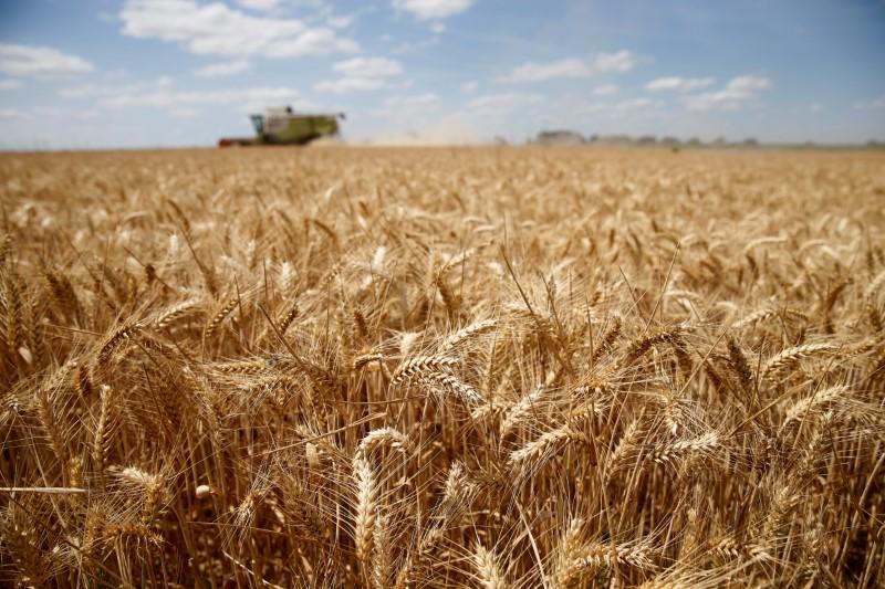 © Reuters. الجفاف يقلص محصول القمح في الاتحاد الأوروبي وتوقعات بانخفاض الصادرات
