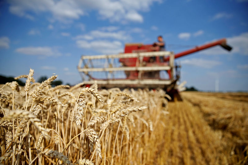 © Reuters. FILE PHOTO: Arnaud Caron, a French farmer, harvests his last field of wheat in Vauvillers
