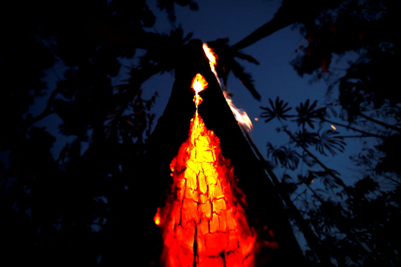 As Amazon burns, 230 big investors call on firms to protect world's ra