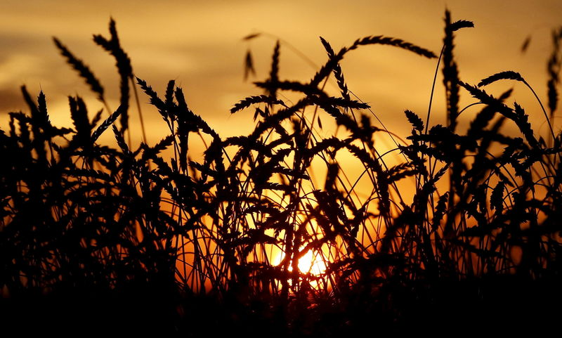 World food prices rise for first time in five months: U.N. FAO By Reut