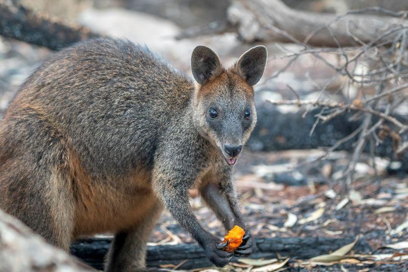 Thunderstorms sweep across Australia's bushfire-ravaged east coast By