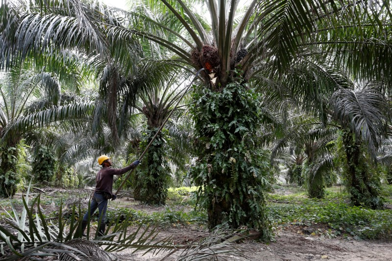 MITI Malaysia open to Davos talks with India amid palm oil spat By Reuters