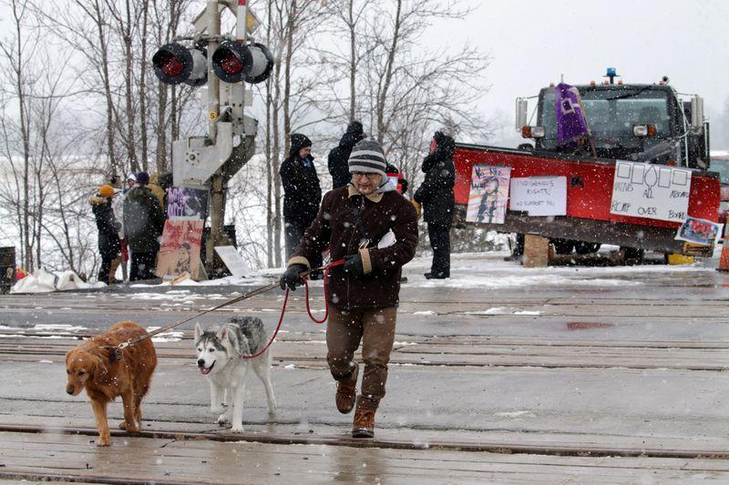 © Reuters. A man walks dogs across train tracks in Tyendinaga