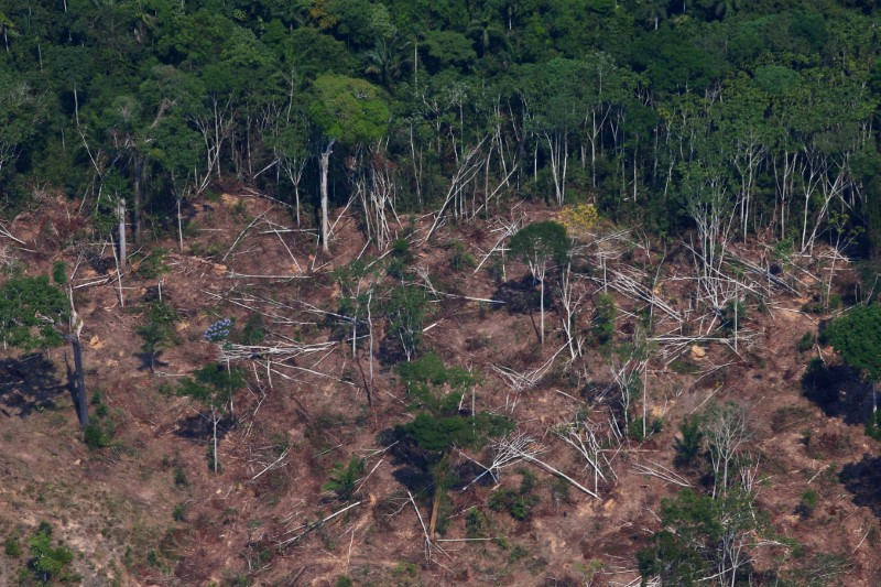 © Reuters. A deforested and burnt plot is seen in Jamanxim National Forest in the Amazon, near Novo Progresso
