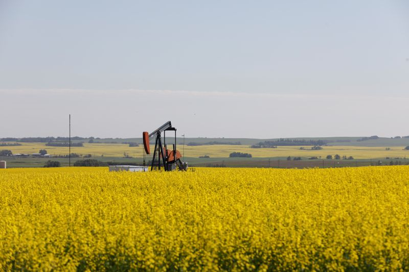 © Reuters. FILE PHOTO: Western Canadian canola fields surrounding an oil pump jack are seen in full bloom before they will be harvested later this summer in rural Alberta