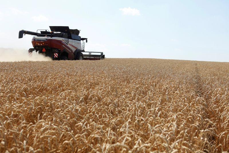 Экспортные цены пшеницы РФ снизились с повышением прогнозов урожая