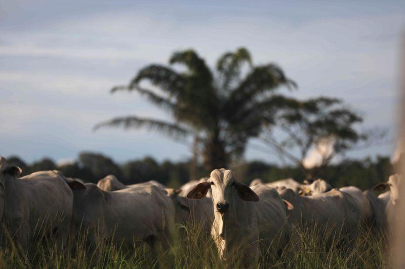 ENFOQUE-Do arroz ao boi, commodities agrícolas do Brasil têm preços recordes