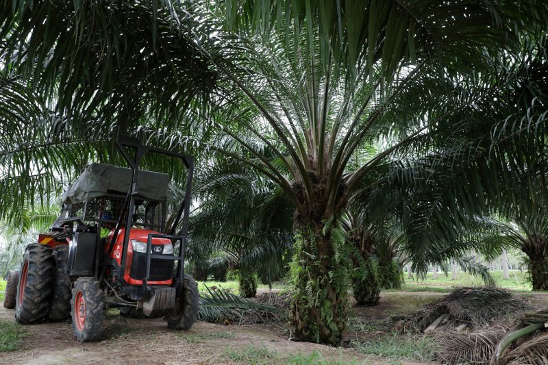 © Reuters. FILE PHOTO: A mini tractor grabber collects palm oil fruits at a plantation in Pulau Carey