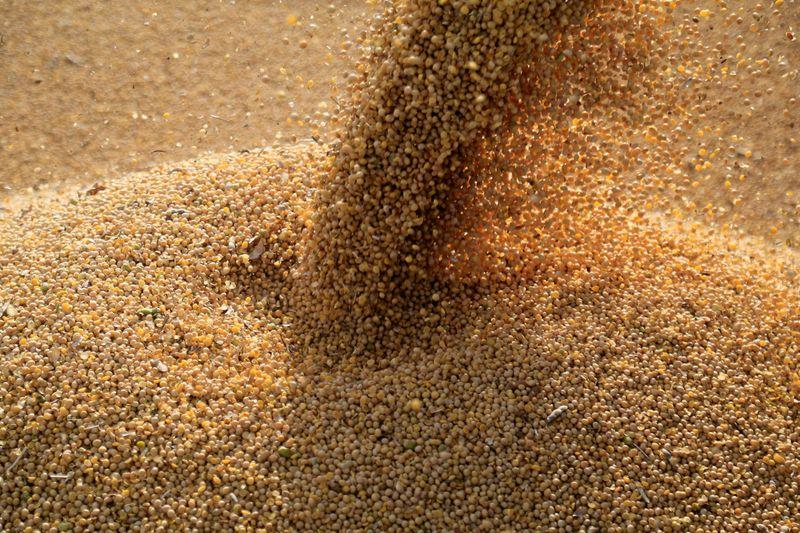 Conab vê nova safra recorde de soja e exportação de 85 mi t do Brasil em 2021