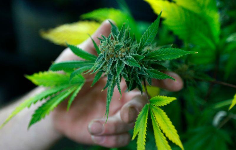 Weed stocks surge as Kamala Harris vows to decriminalize pot in debate