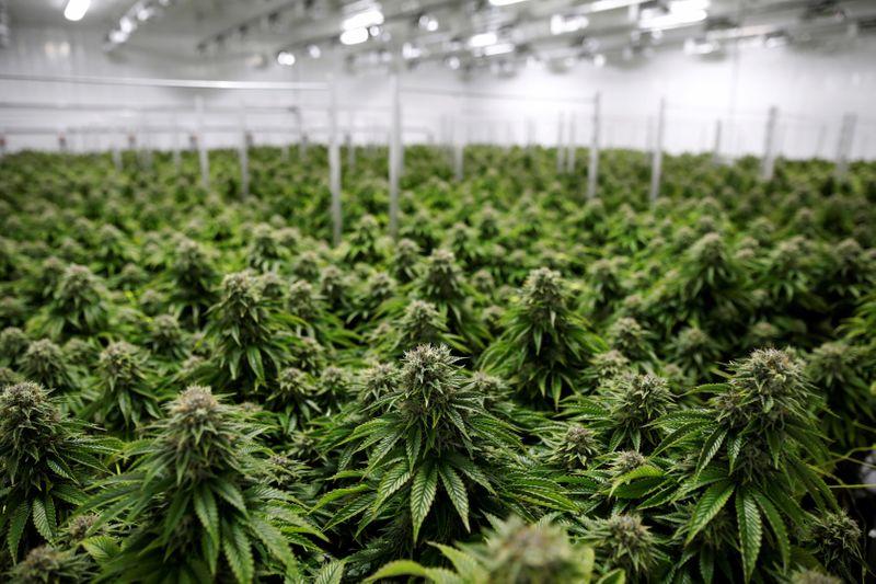 Cannabis companies, betting on a Biden win, ready IPOs