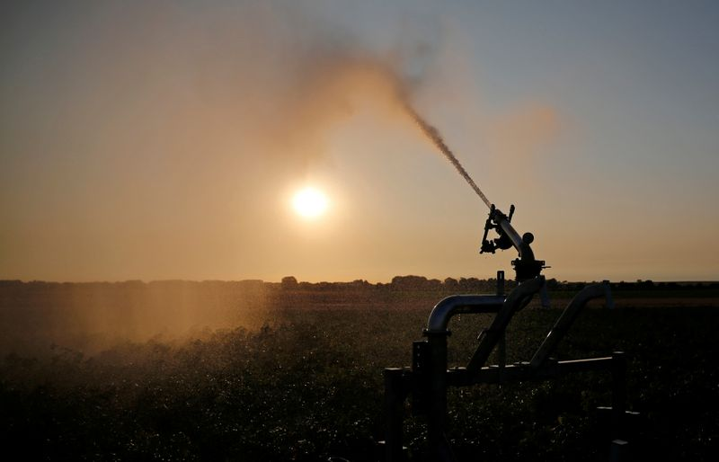 © Reuters. FILE PHOTO: A farmer irrigates his field of potatoes during sunset, in Tilloy-Lez-Cambrai