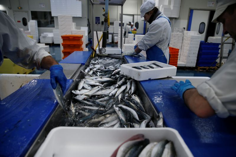 © Reuters. French workers fillet mackerels in a fish processing plant in the port of  Boulogne-sur-Mer
