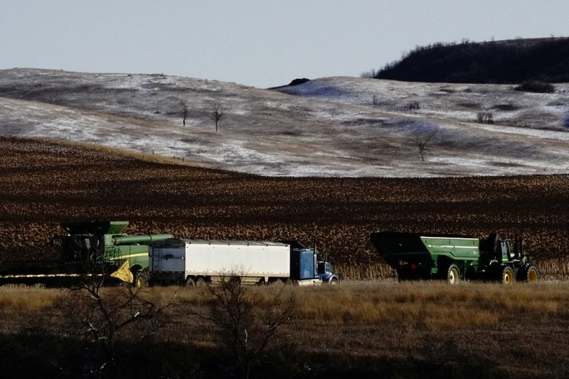© Reuters. FILE PHOTO: An agricultural combine, tractor and trailer, and semi truck are parked alongside corn fields during the fall harvest as the coronavirus disease (COVID-19) outbreak continues in Livonia