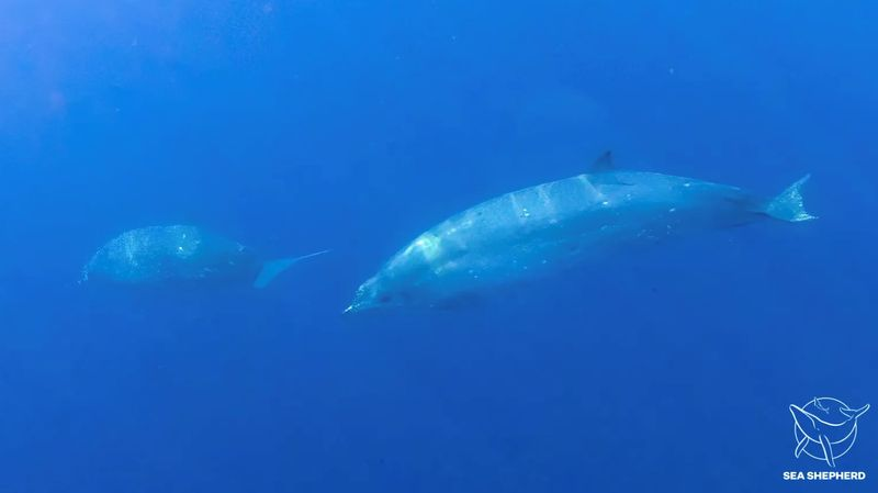 Researchers think they spotted new whale species off Mexico