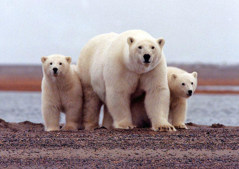 Trump administration readies oil bidding in Alaska wildlife refuge