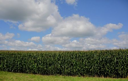 Supreme Court agrees to hear biofuel waiver case By Reuters