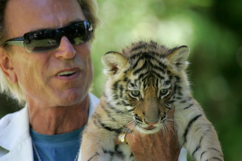 © Reuters. Illusionist Siegfried Fischbacher displays a 6-week-old tiger cub at his home in Las Vegas