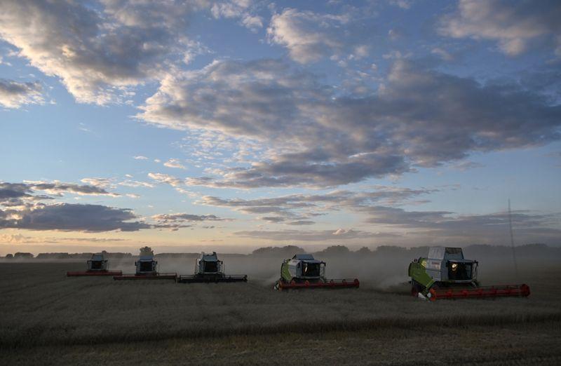 Урожай зерна в РФ в 21г может составить 131 млн т -- ИФ