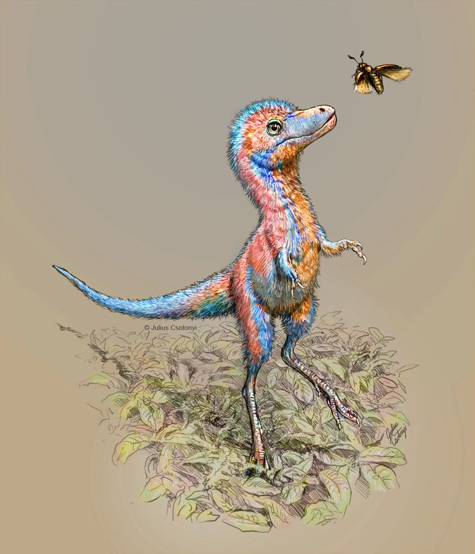 © Reuters. Baby tyrannosaur from the Cretaceous Period of North America is seen in an undated artist's rendition