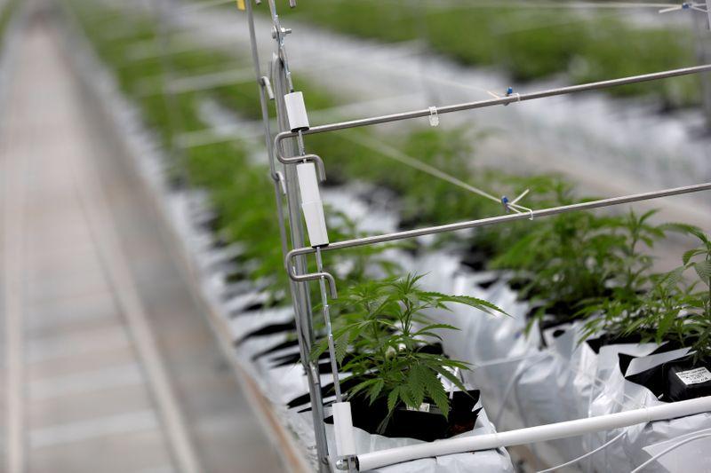 La ruée sur le cannabis se poursuit à Wall Street
