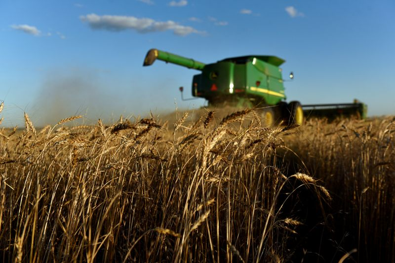 U.S. white wheat growers cash in as China snaps up supplies