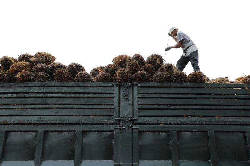 Facing public pressure, palm oil firms are going green: study