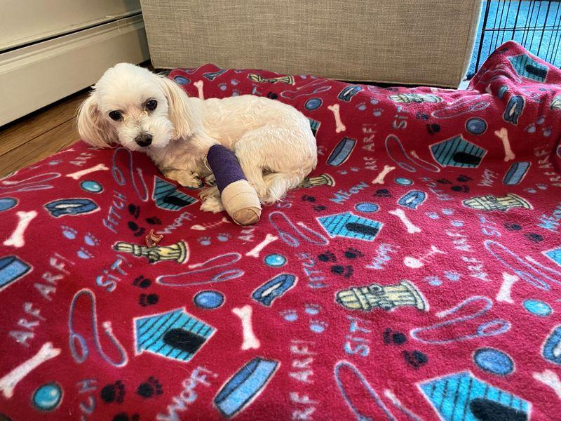 U.S. regulators inch toward pet-insurance rules as Sir Purrs A Lot ails