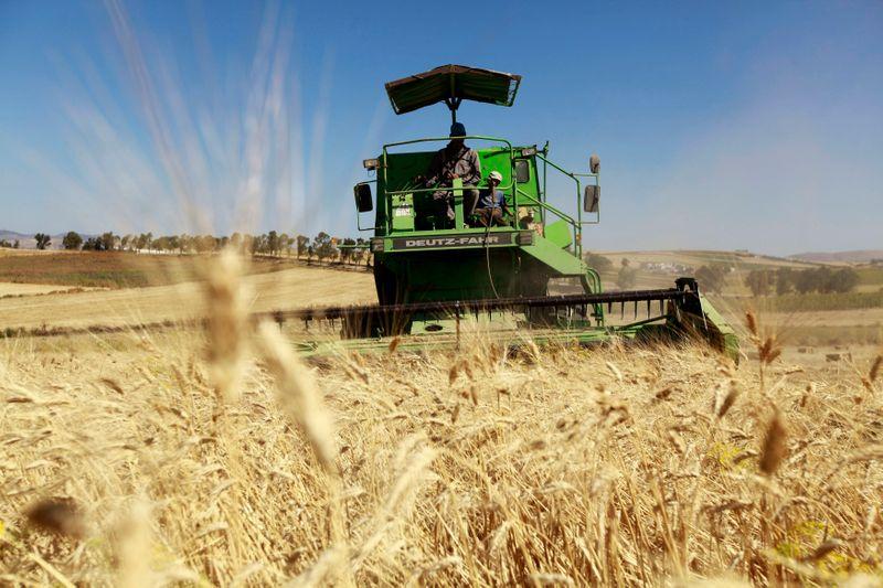 متعاملون: تونس تتلقى عروضا في مناقصة لشراء 75 ألف طن من القمح اللين