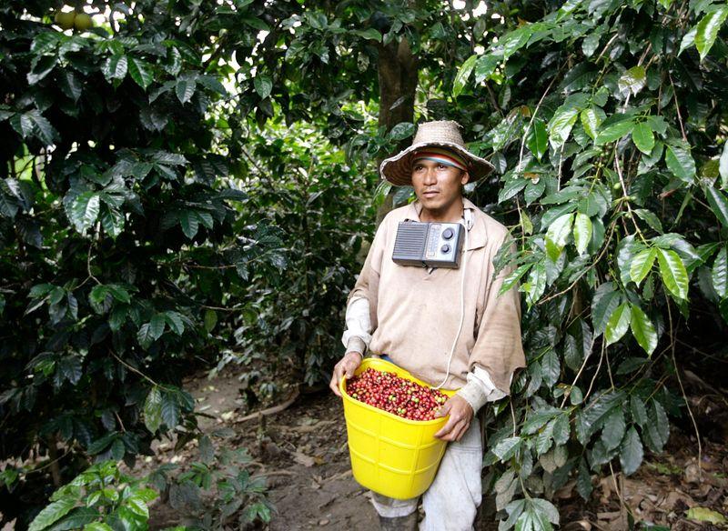 Producción de café de Colombia sube 30% en marzo