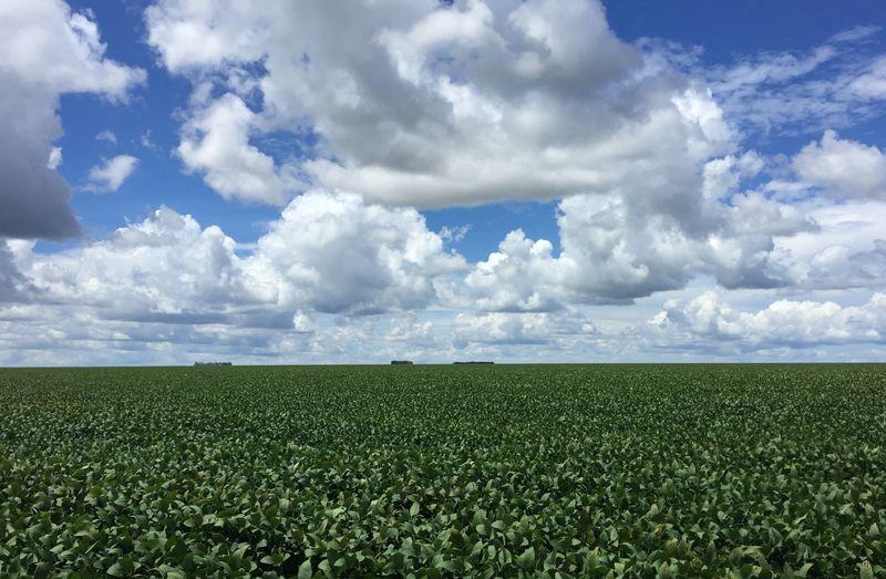 SLC fecha arrendamento de 39 mil ha em áreas da BA e MG com Agrícola Xingu