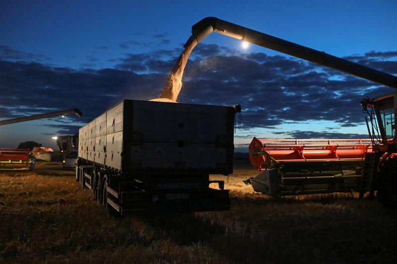 Sovecon eleva previsiones para cosecha de trigo de Rusia en 2021