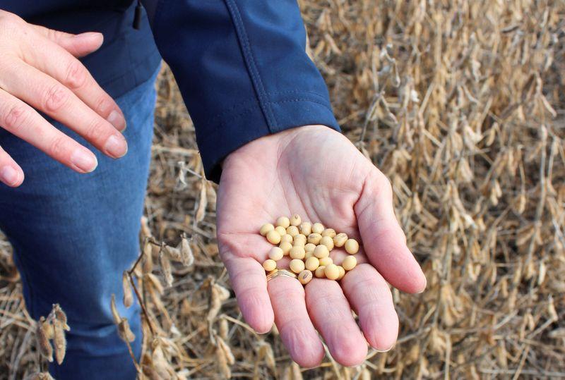 GRANOS-Futuros de soja en EEUU caen por la debilidad del aceite; maíz y trigo también bajan