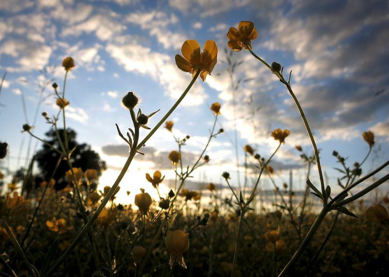 U.S. seeks to conserve more farmland as crop prices climb