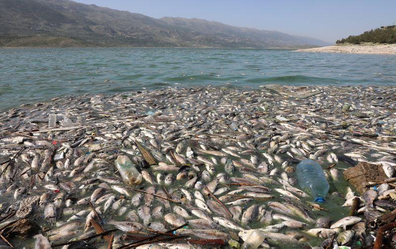 أطنان من السمك النافق على شواطئ بحيرة لبنانية في كارثة بيئية
