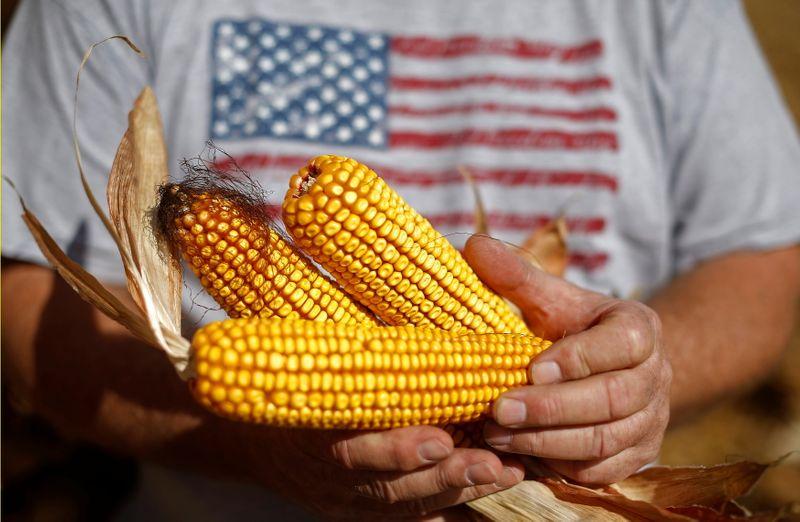 Contrato mais ativo do milho atinge US$7/bushel em Chicago pela 1ª vez desde 2013