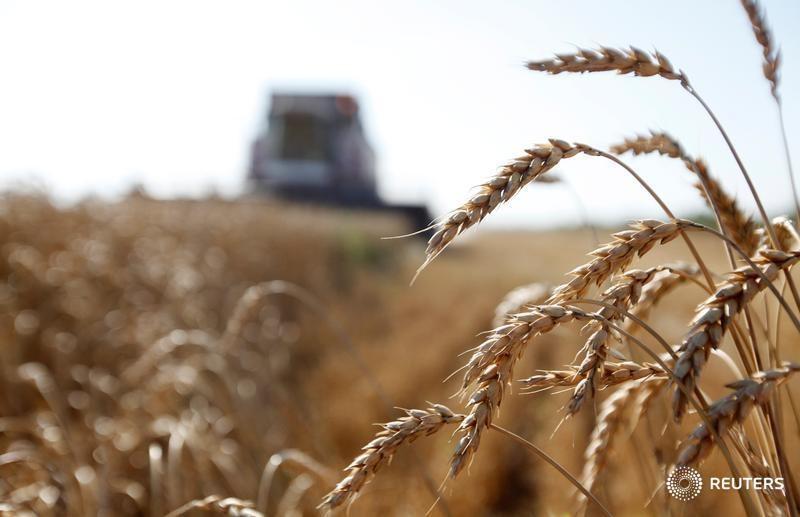 Россия теснит конкурентов на рынке пшеницы благодаря рекордному урожаю