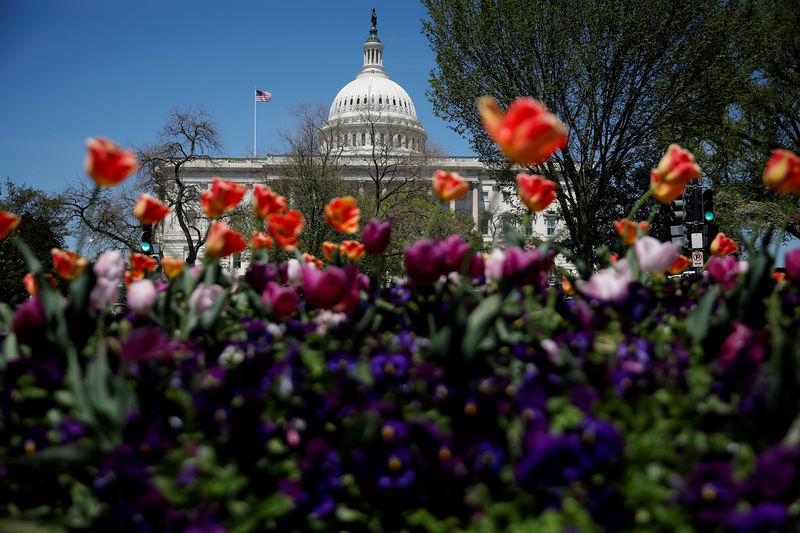 © Reuters. The Capitol dome is seen amongst blooming flowers in Washington