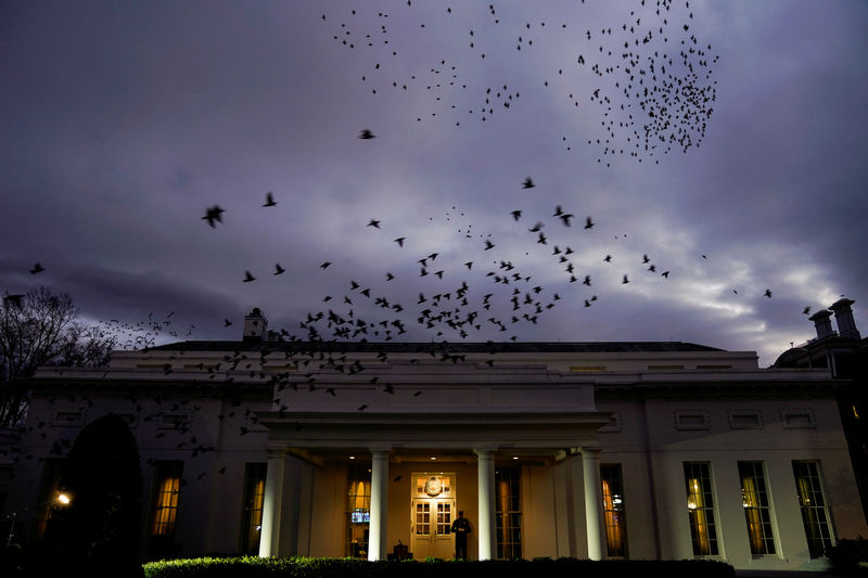 © Reuters. Starlings fly over the West Wing of the White House in Washington